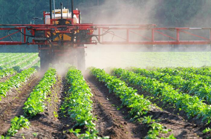Spraying vegetables.